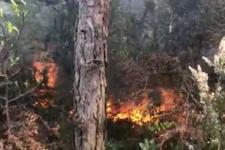Aydos Ormanları'nda yangın çıktı