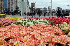 İBB Taksim Meydanı'nı lalelerle süsledi