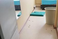 Manisaspor tesislerini böcekler bastı!