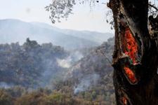 Muğla'da 4 hektarlık orman alev alev yandı