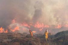 Bodrum'da çıkan yangında 40 hektarlık alan kül oldu