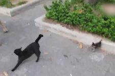 Yavrularını kurtarmak için köpeğe böyle saldırdı