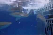 Shaquille O'Neal köpek balıklarıyla dolu suda büyük tehlike atlattı