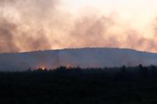 Kartal'daki Aydos Ormanı'nda yangın çıktı