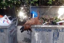 Öldürülüp çöpe atılan köpekler Bodrum'u ayağa kaldırdı!