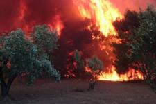 Çanakkale yangınında dehşete düşüren görüntüler!