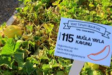 Muğla'da yerel tohum merkezi açıldı