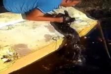 Zifte düşen köpek hayvanseverler tarafından kurtarıldı