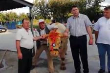 Erdoğan'a Trakya'dan dev kurbanlık