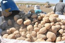 Patates fiyatları artacak mı sorusuna yanıt geldi