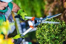 Bahçeler için sonbahar bakımı önerileri