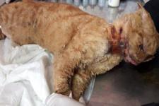 Antalya'da kediye insanlık dışı muamele! Naylon yakıp damlattılar