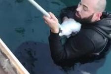 Yavru kediyi kurtarmak için buz gibi denize atladı