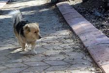 Her gün evden kaçan köpeğin nereye gittiğini görünce ağladı