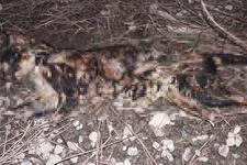 Çanakkale'de korkunç olay! Kediyi vahşice öldürdüler