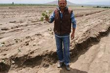 Nevşehir'de patates tarlalarını sel vurdu