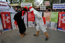 Saadet Partisi'nden horozlu protesto!