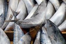 Balık fiyatları cep yakıyor!