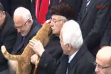 Erbakan'ı anma töreninde kedi sürprizi