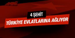 Mardin Hakkari ve Bingöl'den acı haber 8 şehit