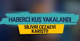 Silivri Cezaevi karıştı: Haberci kuş yakalandı!