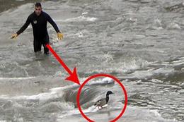 -20 derece soğukta dalgıç kovaladı, yaralı ördek kaçtı