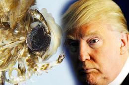 Donald Trump'ı benzetmedikleri hayvan yok bakın bu kez ne