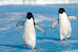 40 bin penguenden sadece 2'si hayatta kaldı