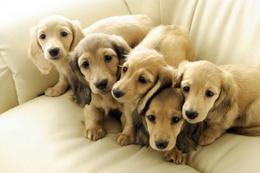 Köpek sahiplerinin ölüm riski daha az