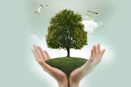Eğer ağaç keserse 100 bin euro ödeyecek