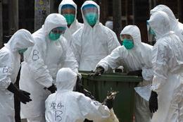 Çin'de kuş gribi aşısında gelişme