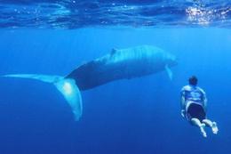 Mavi balinalar 3 milyon yıl önce meğer...
