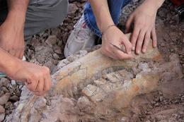 Ayağı takıldı 1 milyon yaşında fosil buldu