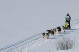 İklim değişikliğinin yararlı olduğu tek yer: Sibirya
