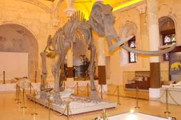 Burdur Doğa Tarihi Müzesi öğrencilere de hizmet veriyor