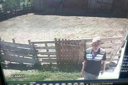 Hayvan hırsızları kameraya böyle yakalandı