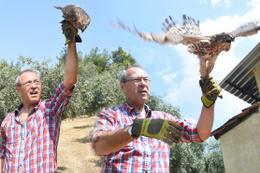 Tavuklarını yiyen kuşu yakaladı