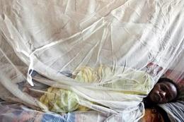 Lassa sıtması alarmı verildi okullar tatil edildi