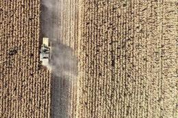 Konya Ovası'nda çiftçinin yeni gözdesi