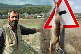 Caniliğin böylesi görülmedi! Tilkiyi öldürüp trafik levhasına astılar!