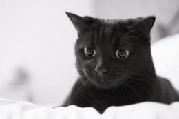 Kedi besleyenler dikkat!
