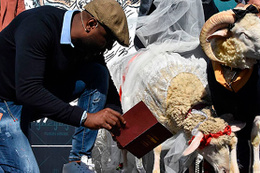 Koç ile koyunun nikah şahidi Pascal Nouma oldu