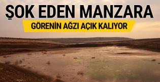 Bu fotoğraf Türkiye'de çekildi! Görenin ağzı açık kalıyor