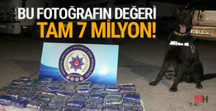 Tam 7 milyon TL'yi bulan narkotik köpeği!