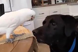 Dostunu besleyen papağandan paylaşım dersi!