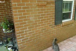 Yok artık! Yılanın duvardaki halini görünce...
