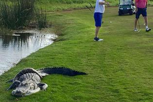 Golf sahasında şoke eden olay kimse ne olduğunu anlamadı