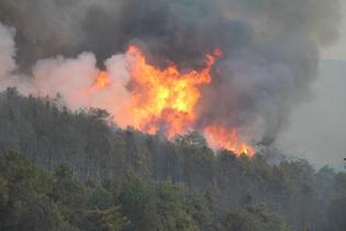 Denizli'deki orman yangını kontrol altında