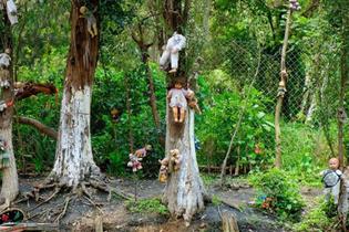 Okuyunca kanınız donacak bu ormana gelen insanlar birer birer...