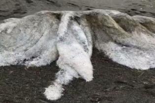 Karaya vuran dev deniz yaratığı panik yarattı